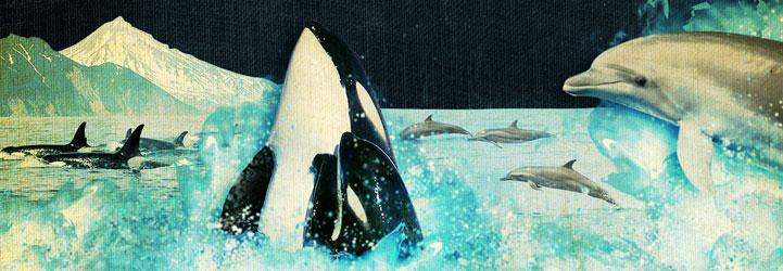 DolphinSlideH2