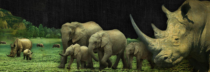 ElephantRhinoH2
