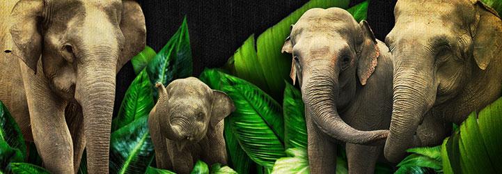 ElephantSlideH2