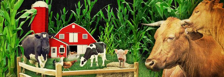 FarmSlideH2