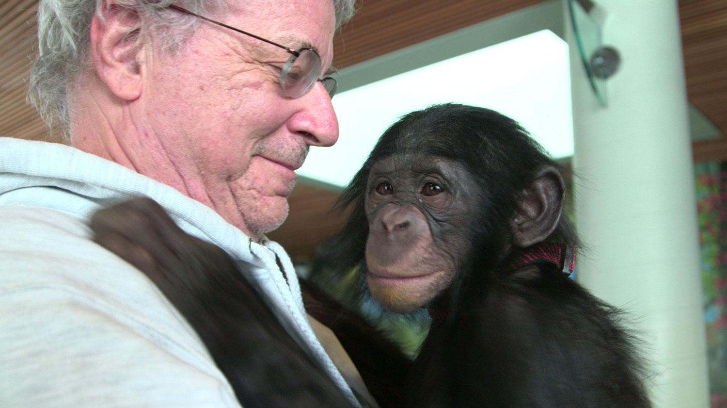 Steve Wise of The Nonhuman Rights Project - My Dream for Animals Interview