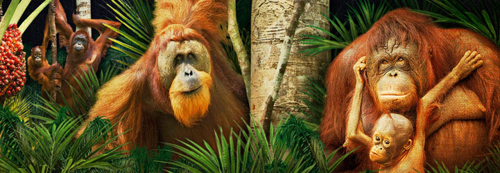 OrangutanSlideH2