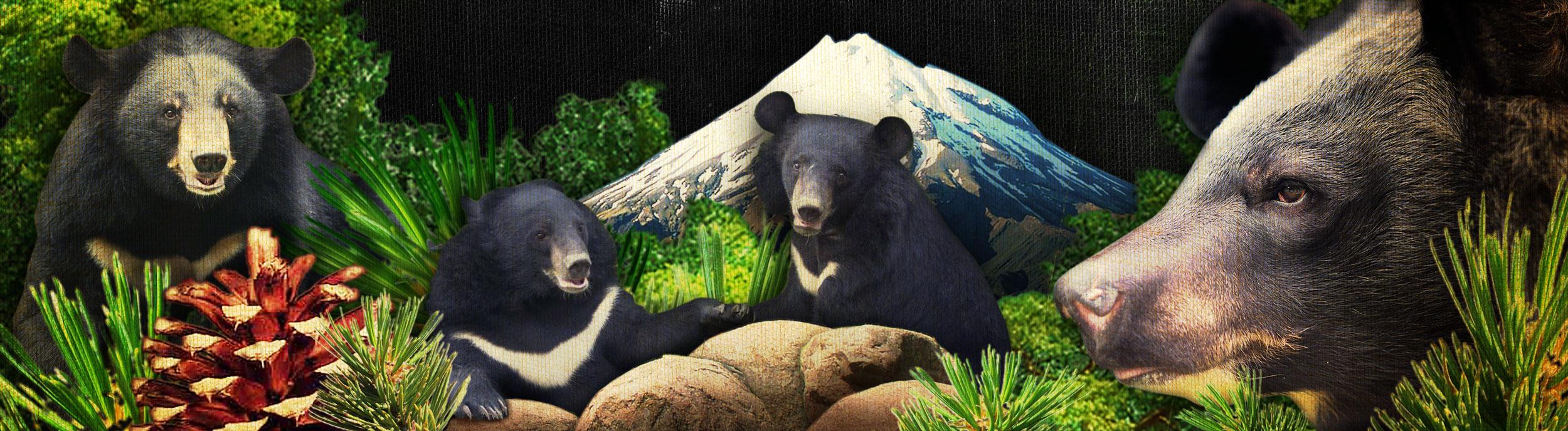BearSlideXXL