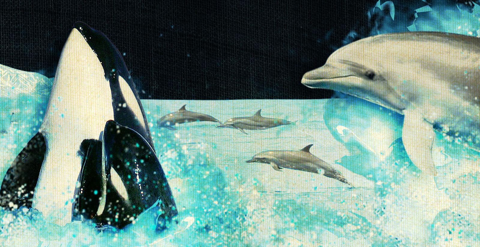 DolphinSlideMd