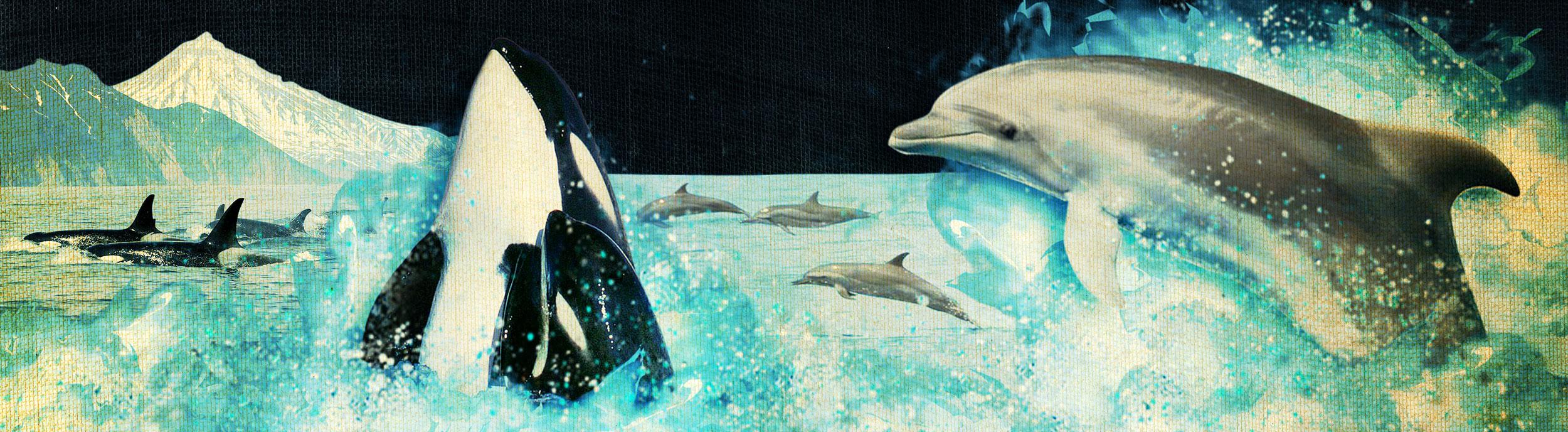 DolphinSlideXXL
