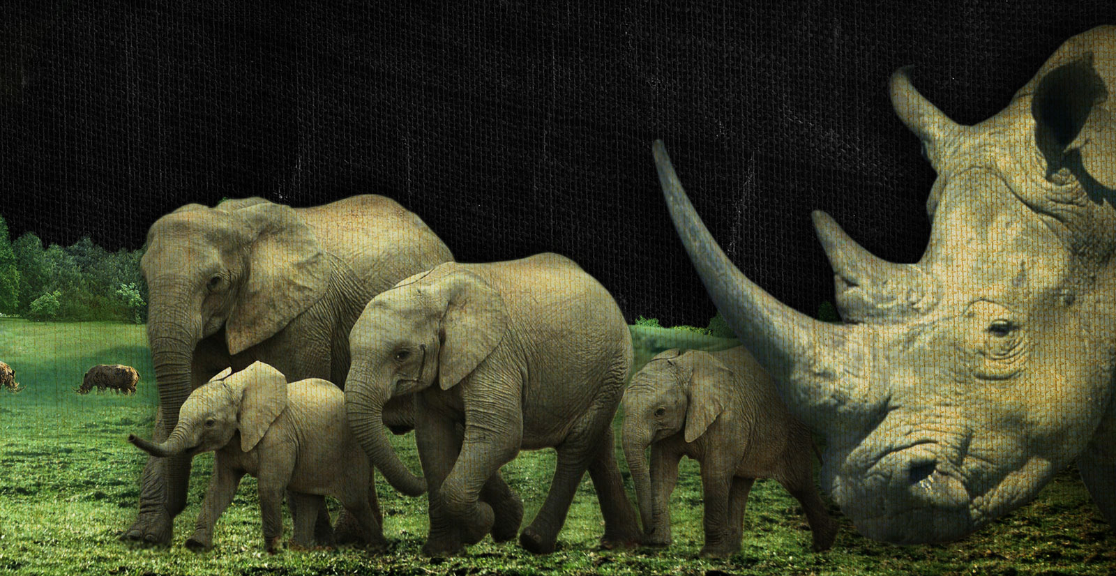 ElephantRhinoMd