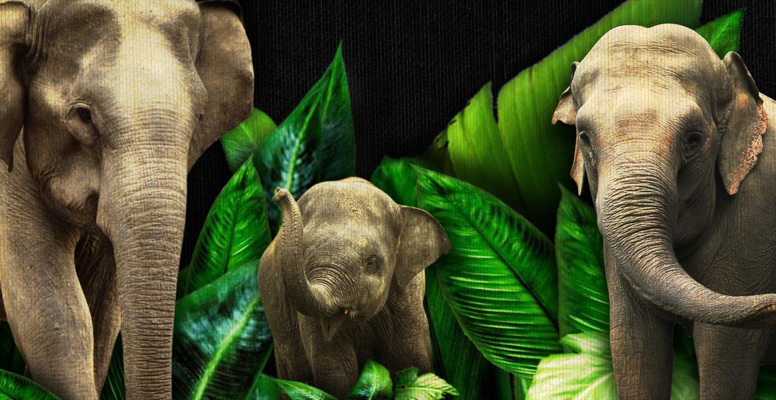 ElephantSlideMd