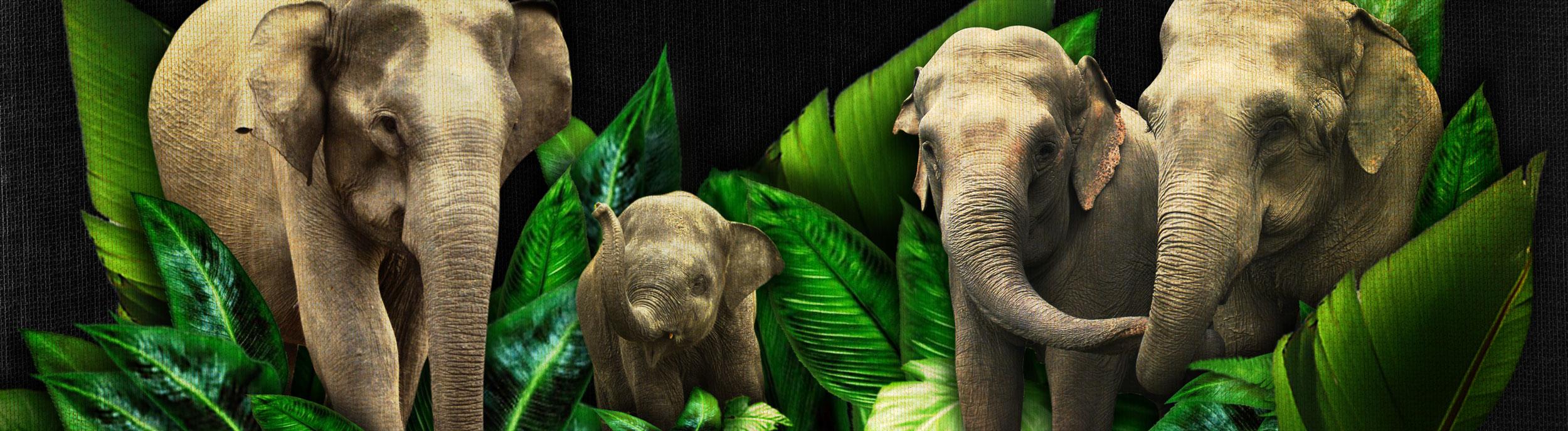 ElephantSlideXXL