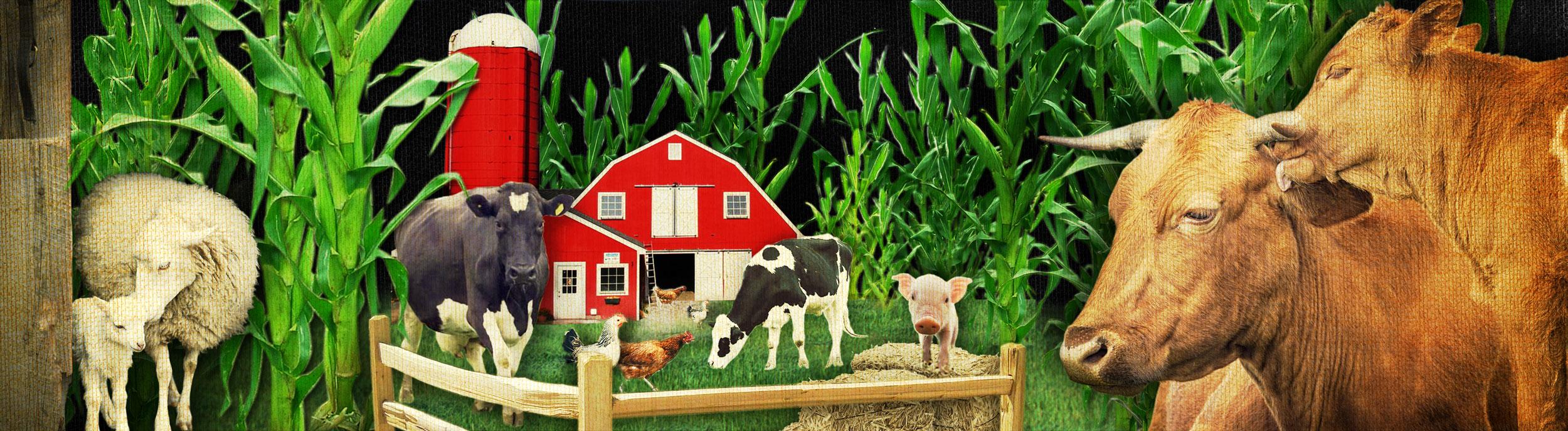 FarmSlideXXL