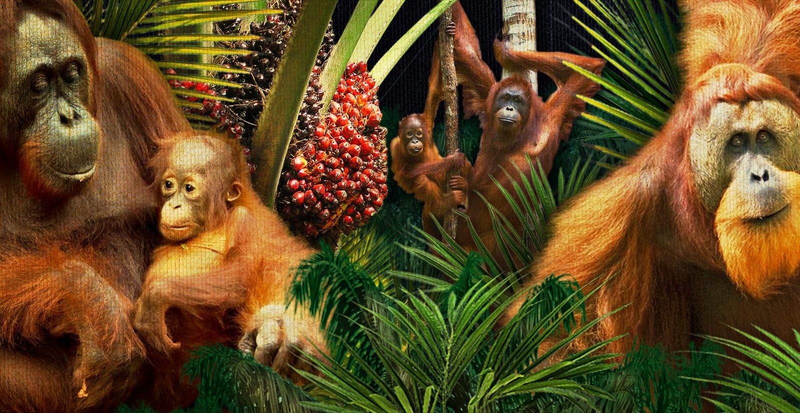 OrangutanSlideMd