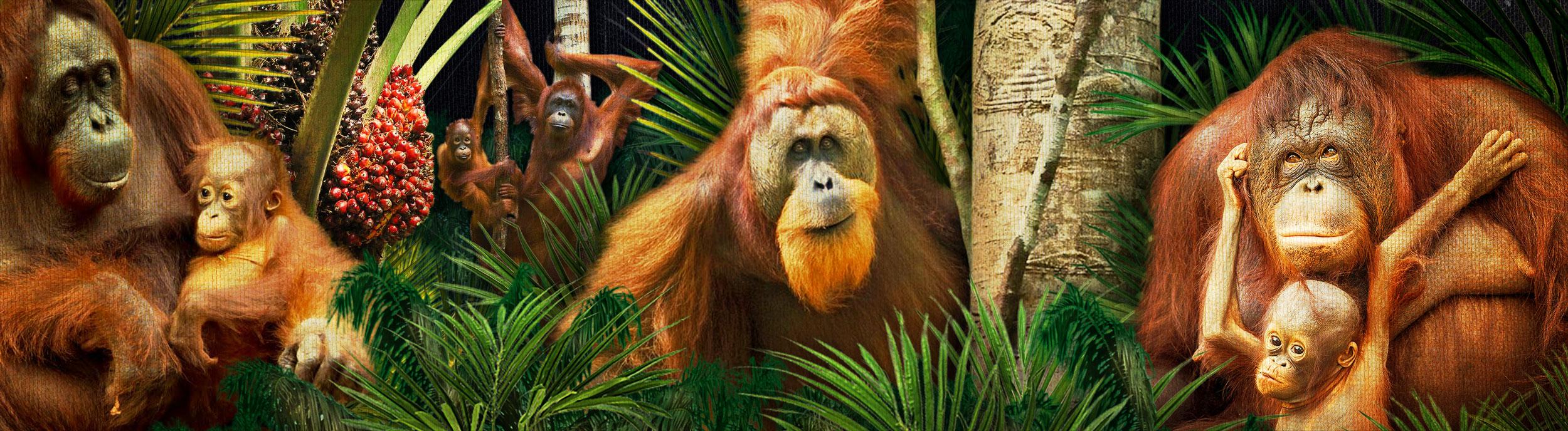 OrangutanSlideXXL